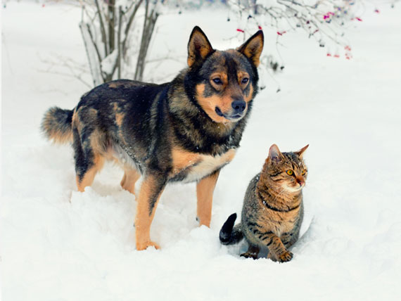 Protecting Pets From Cold Weather