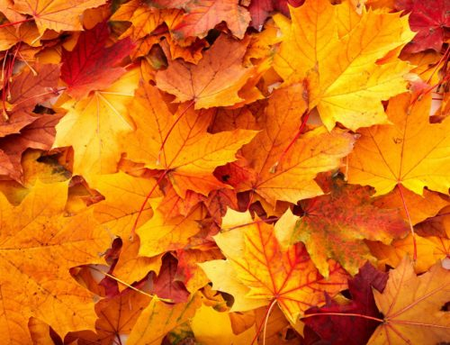 Prepare Your Home For Fall Weather