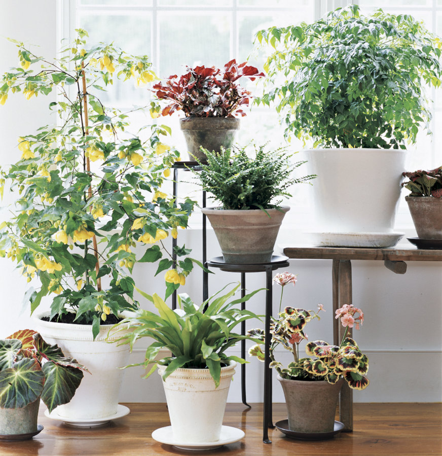 Best Plants to Clean Indoor Air