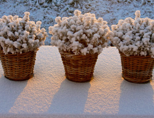 Protecting Your Potted Plants From The Cold